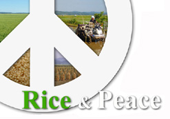 Rice and Peace